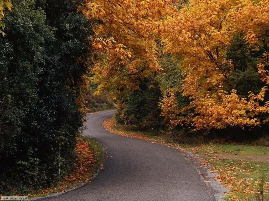 Foto desktop dell'autunno 007