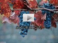 Guarda tutte le foto grandi su autunno for Foto per desktop gratis autunno