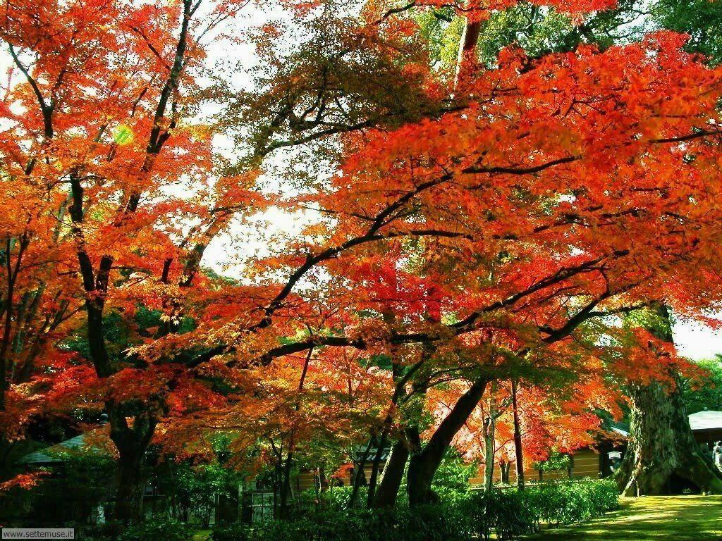 foto autunno per sfondi desktop