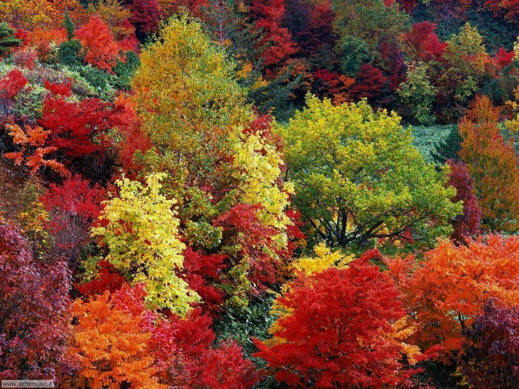 Autunno stagione di decrescita paesaggi di decrescita for Foto per desktop gratis autunno