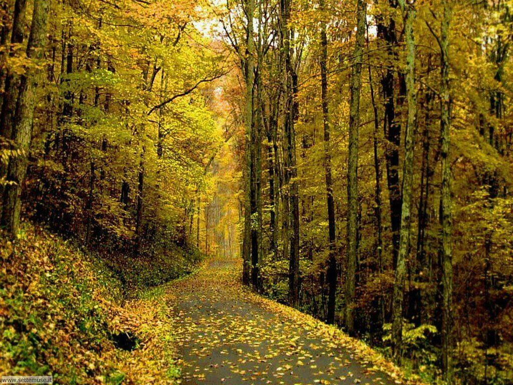 Foto desktop dell'autunno 018