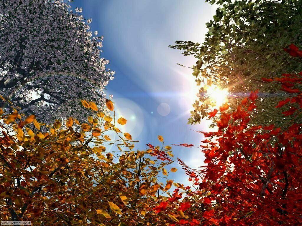 Foto desktop dell'autunno 019