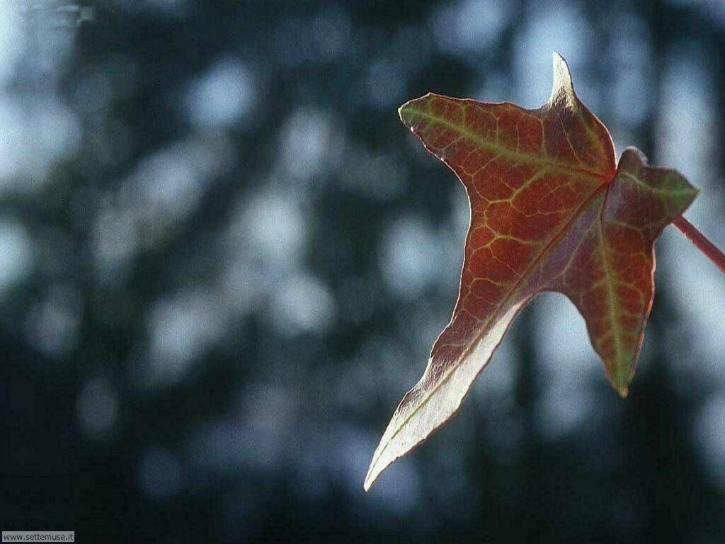 Foto desktop dell'autunno 023