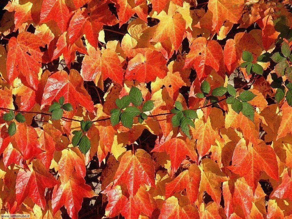 Foto desktop dell'autunno 024