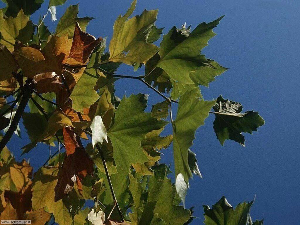 Foto desktop dell'autunno 025
