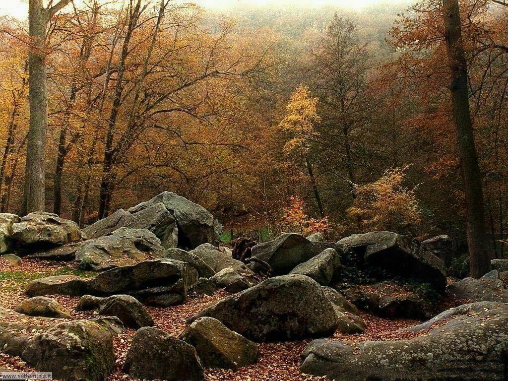 Foto desktop dell'autunno 029