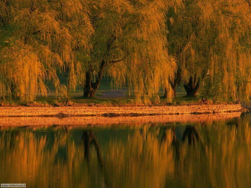 Foto desktop dell'autunno 030