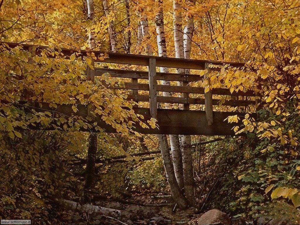 Foto desktop dell'autunno 033
