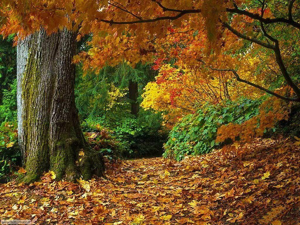 Foto desktop dell'autunno 035