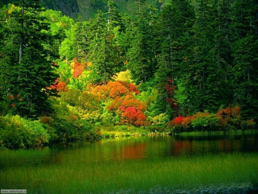 Foto desktop dell'autunno 038