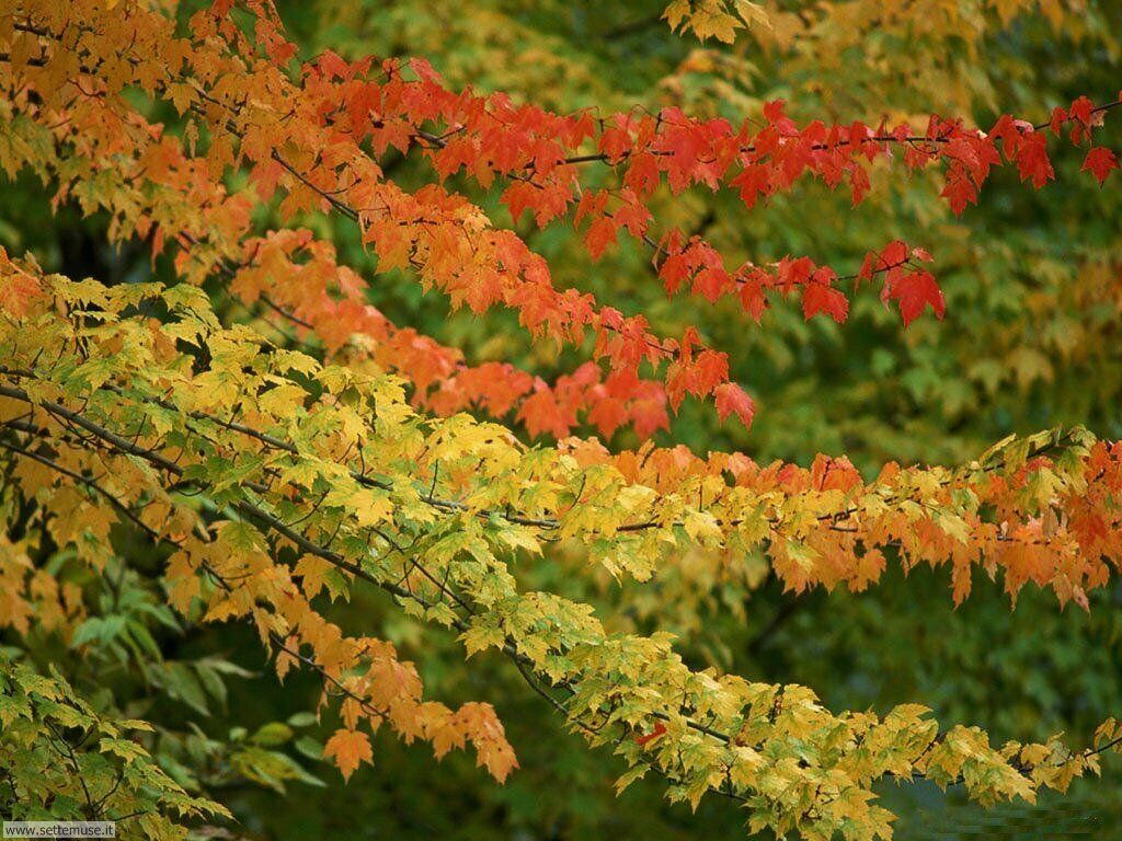 Foto desktop dell'autunno 039