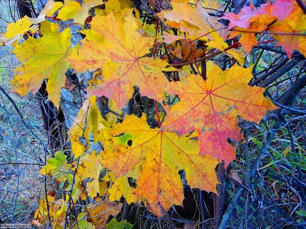 Foto desktop dell'autunno 040