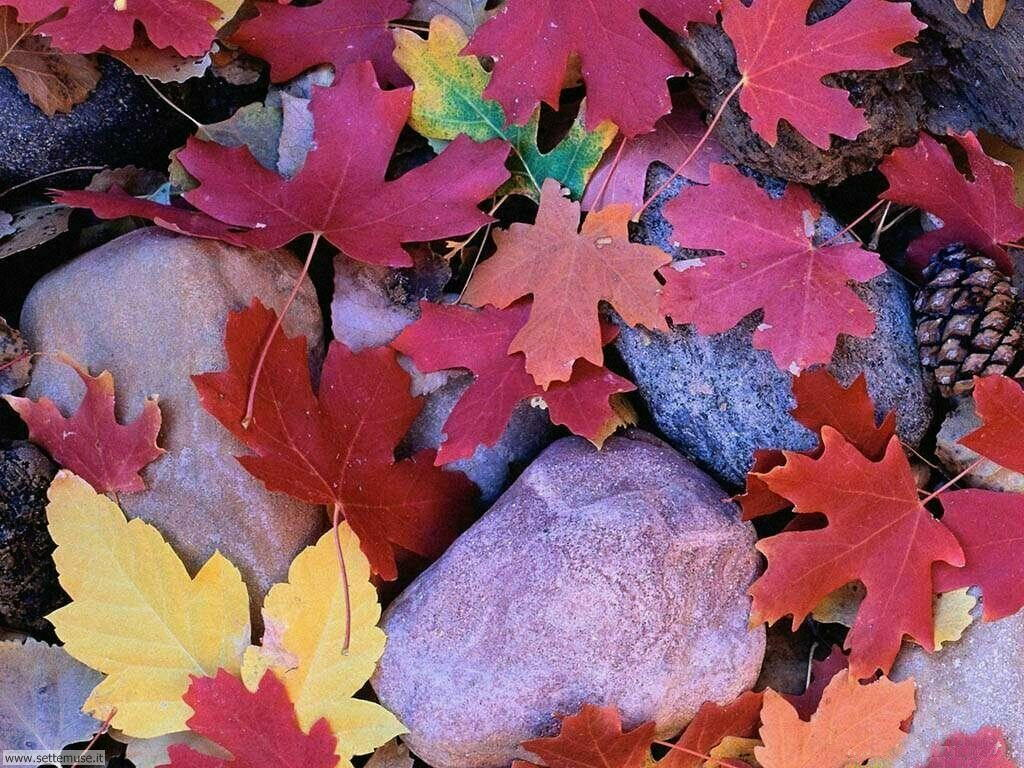 Foto desktop dell'autunno 041