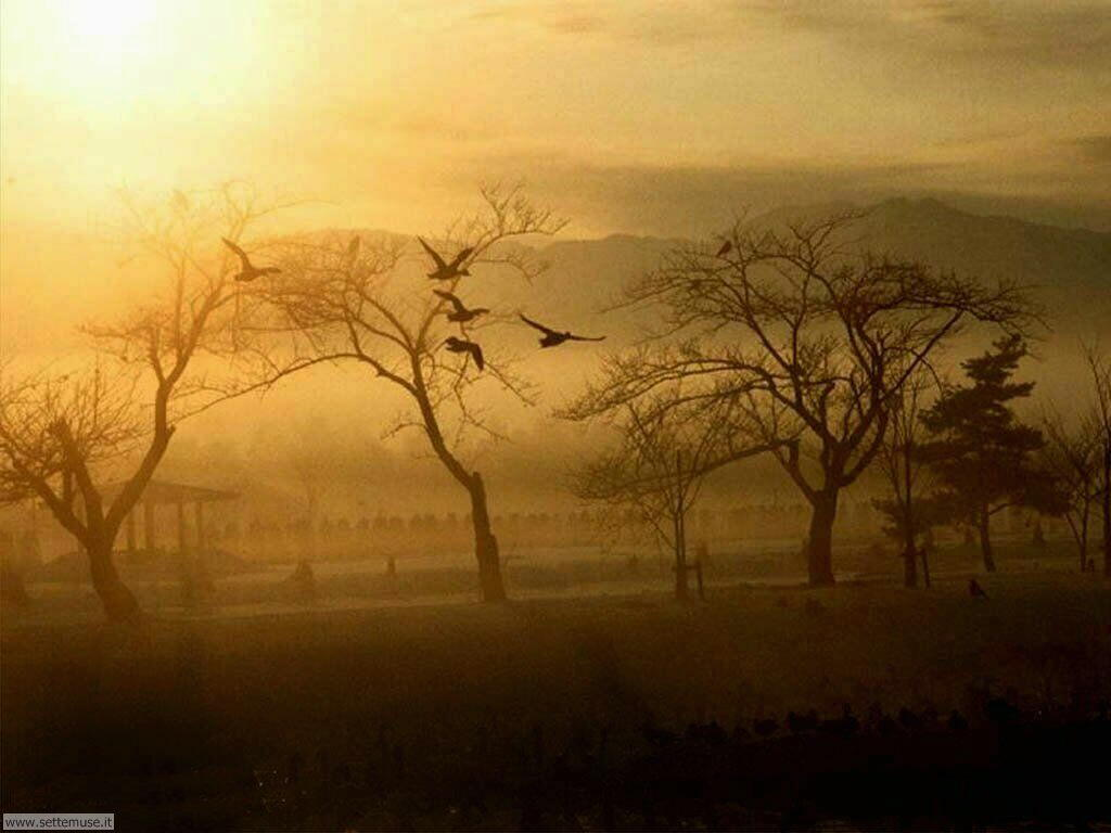 Foto desktop dell'autunno 043
