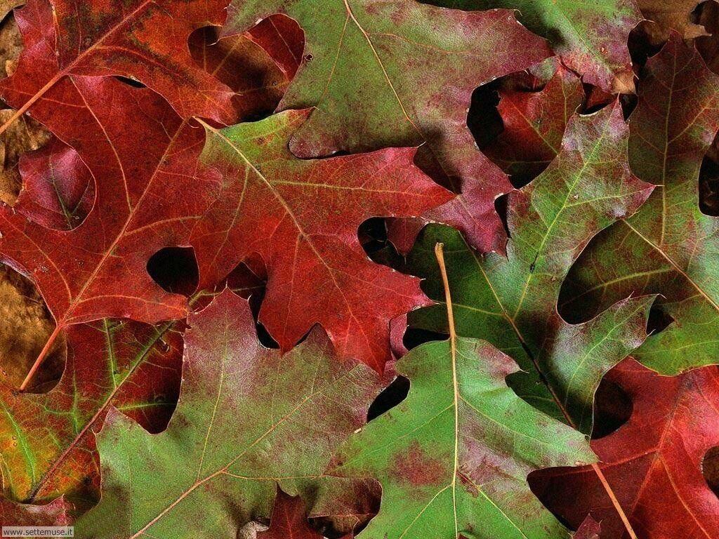 Foto desktop dell'autunno 046