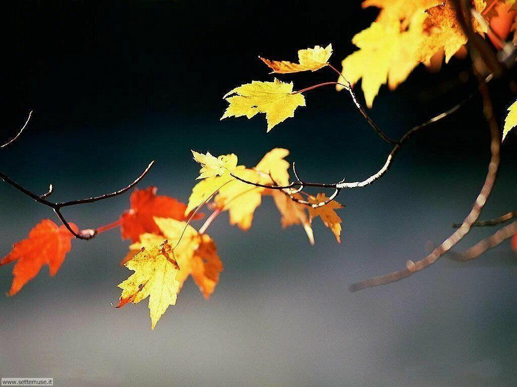 Foto desktop dell'autunno 047