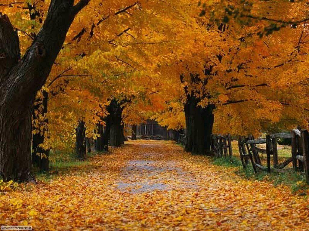 Foto desktop dell'autunno 048