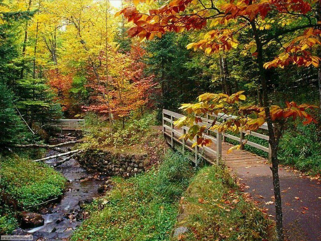 Foto desktop dell'autunno 049