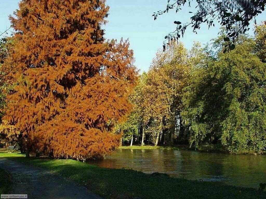 Foto desktop dell'autunno 051