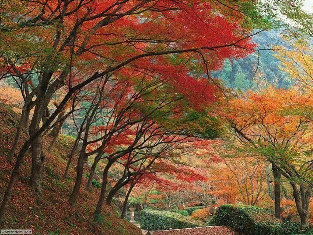 Foto desktop dell'autunno 054