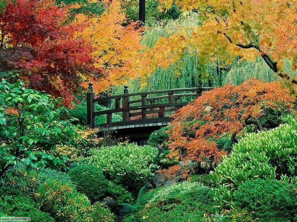 Foto desktop dell'autunno 057