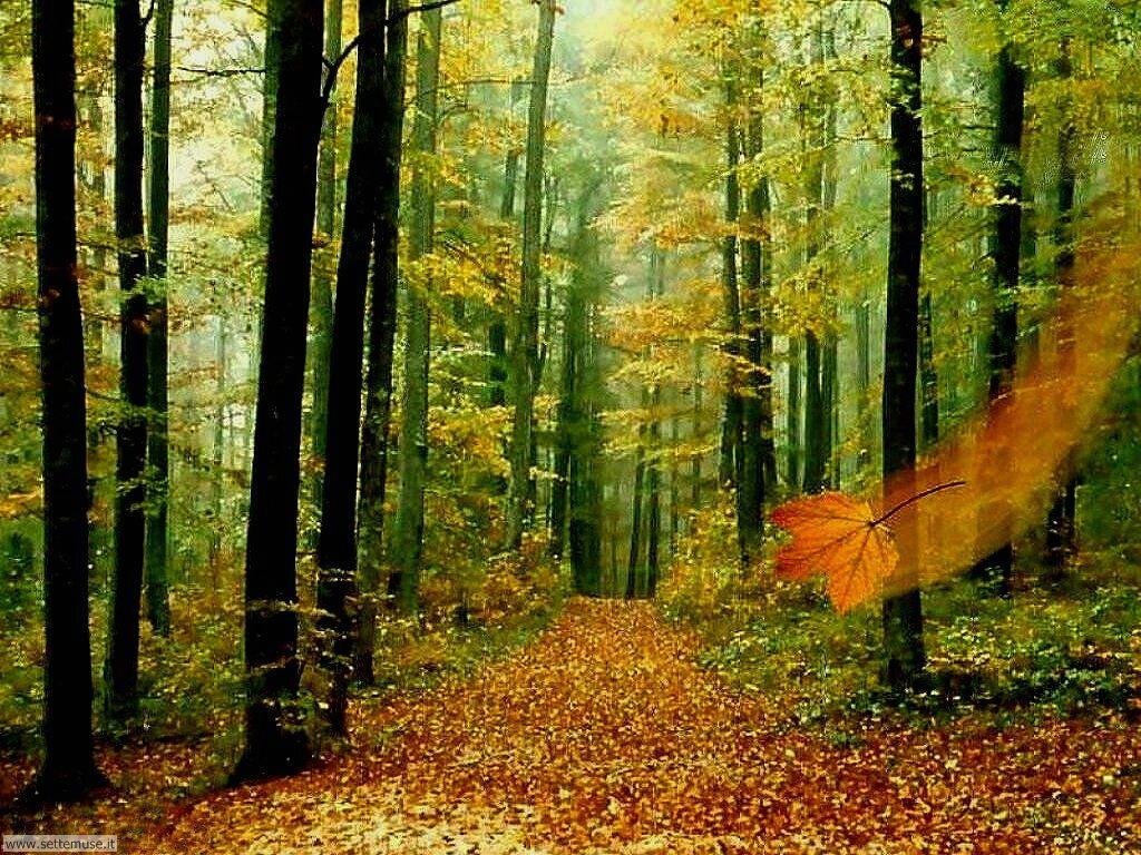 Foto desktop dell'autunno 059