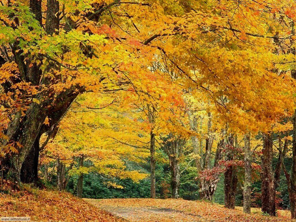 Foto desktop dell'autunno 060