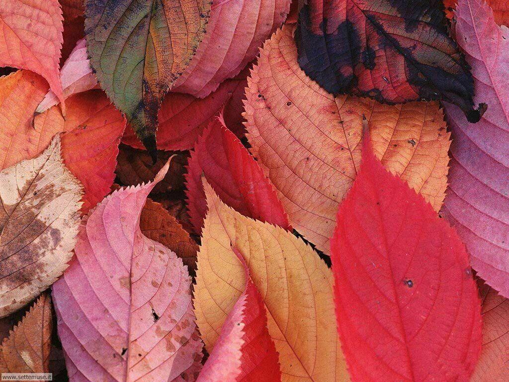 Foto desktop dell'autunno 065