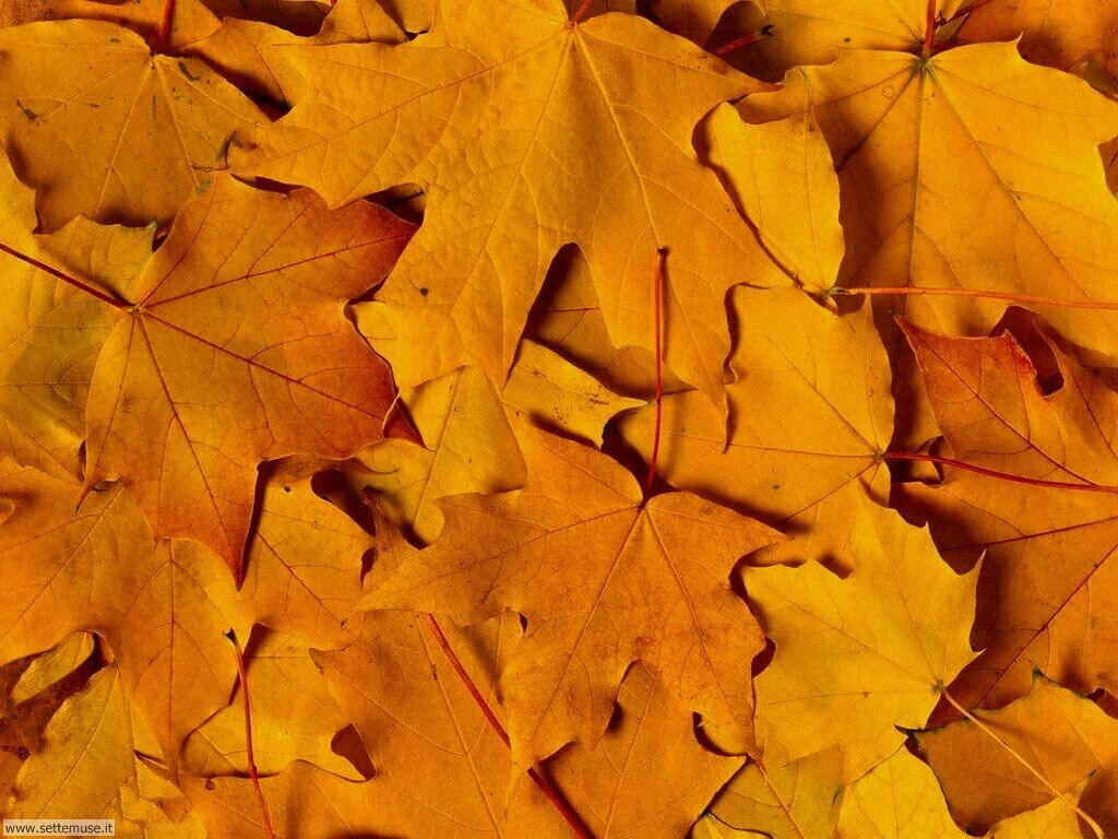 Foto desktop dell'autunno 066