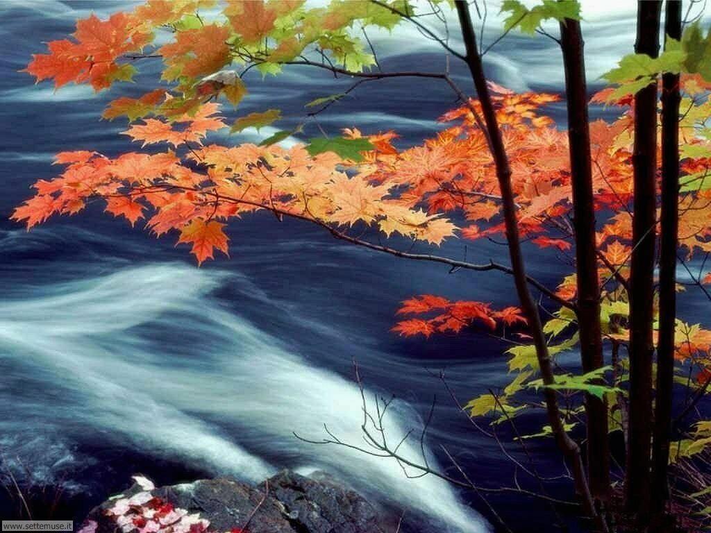 Foto desktop dell'autunno 067