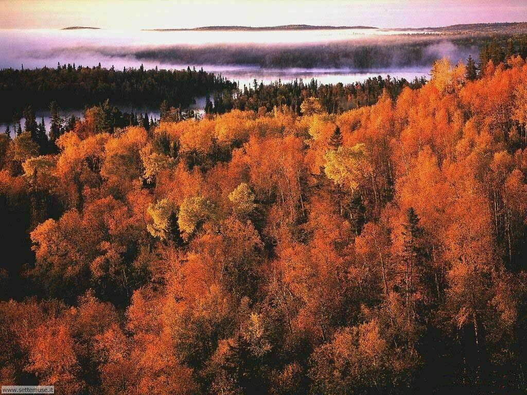 Foto desktop dell'autunno 068