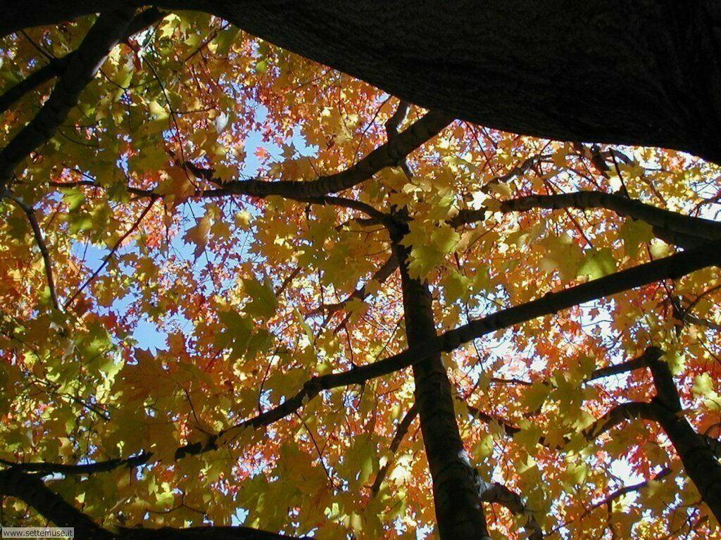 Foto desktop dell'autunno 070