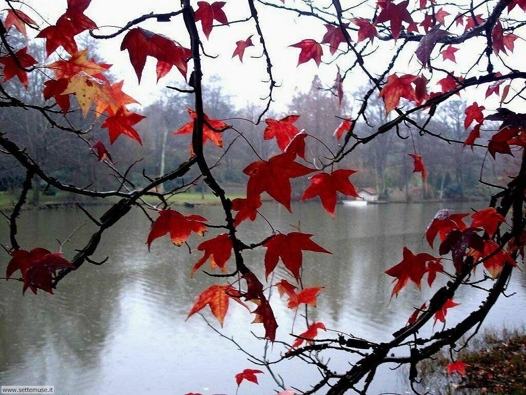 Foto desktop dell'autunno 071
