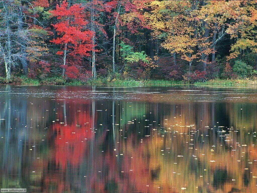 Foto desktop dell'autunno 073