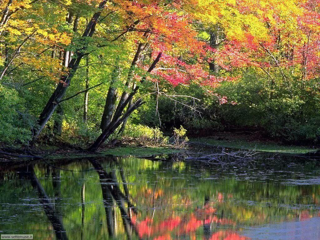 Foto desktop dell'autunno 074