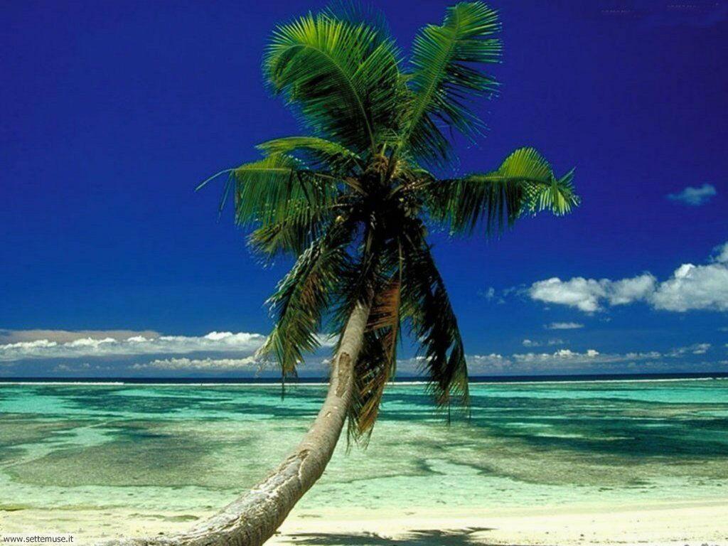 Foto desktop della stagione estate 003