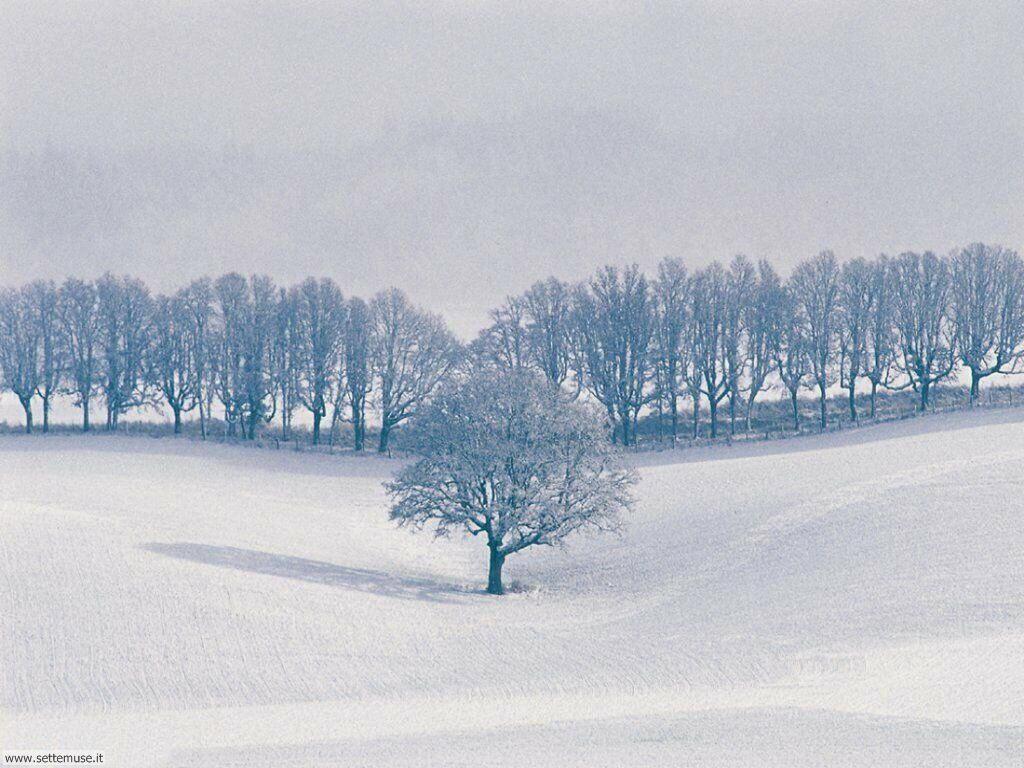 Foto Inverno Per Sfondi Desktop Settemuseit