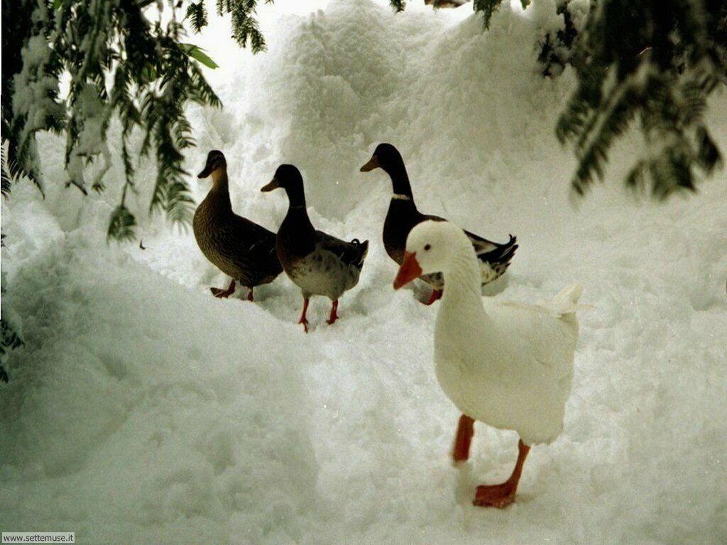 Foto desktop della stagione inverno 046