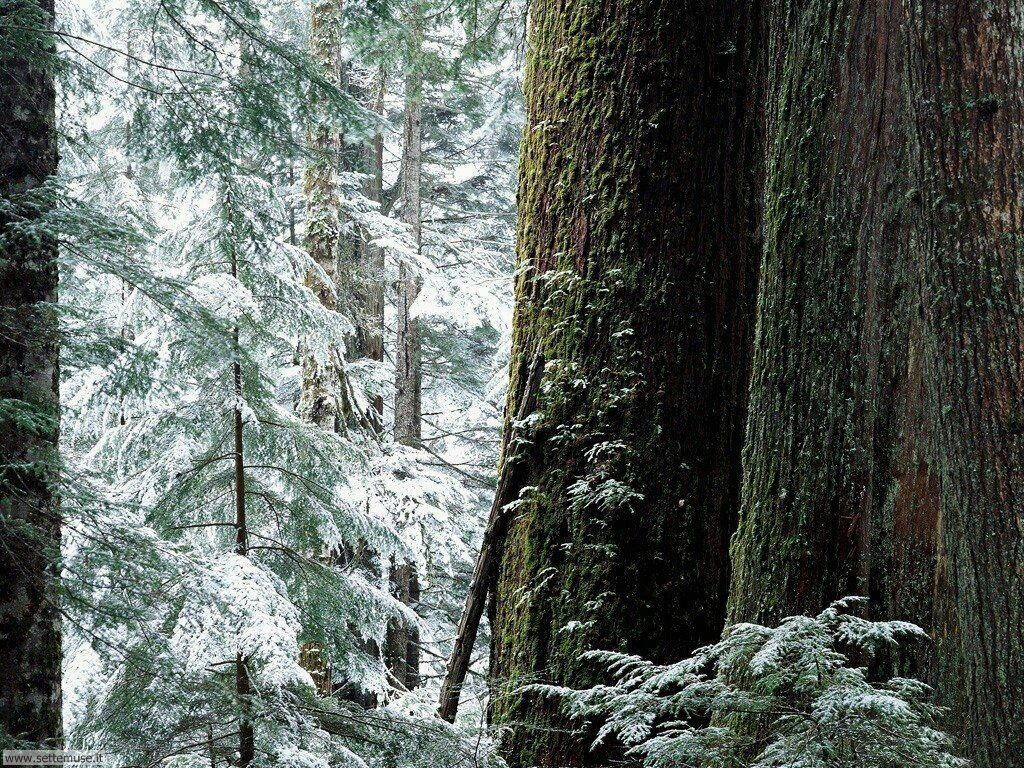 Foto desktop della stagione inverno 048