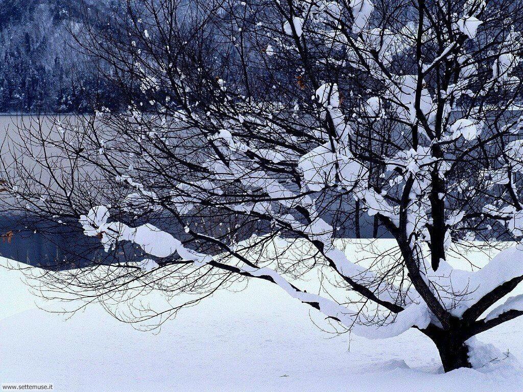 Foto desktop della stagione inverno 049
