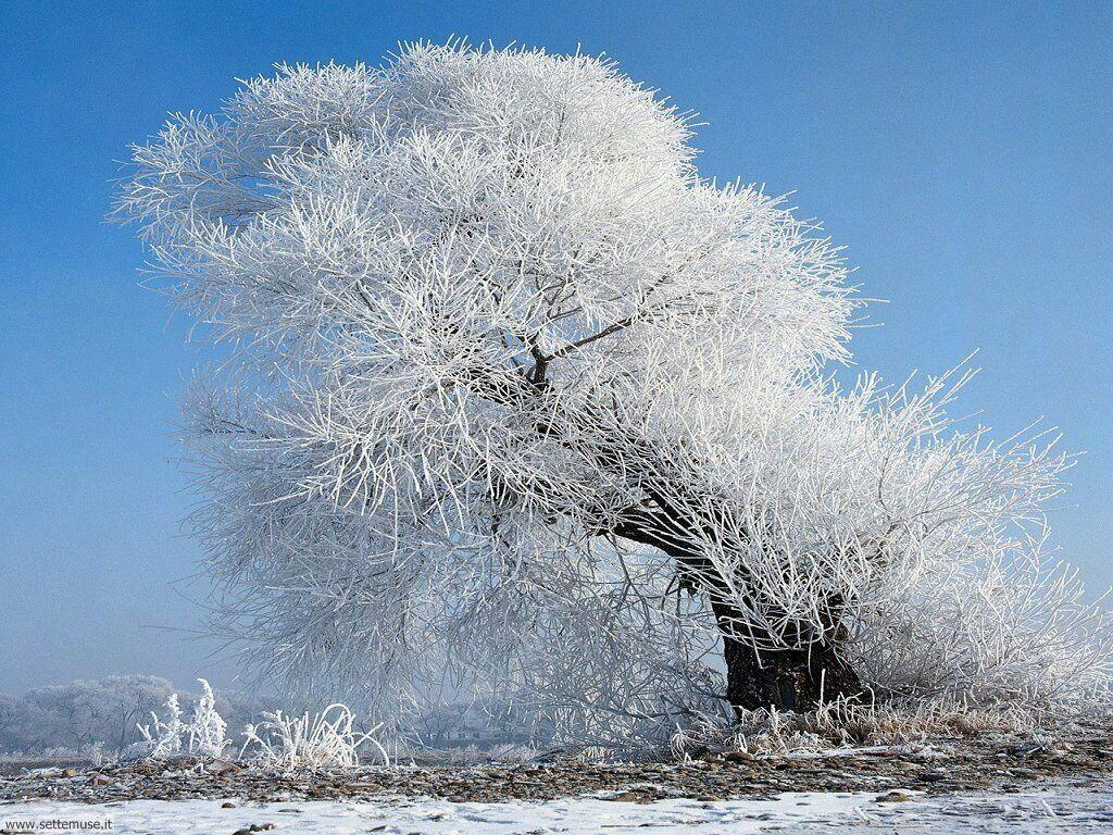 Foto desktop della stagione inverno 052