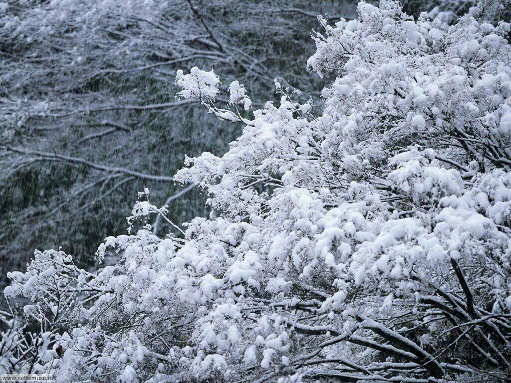 Foto desktop della stagione inverno 053