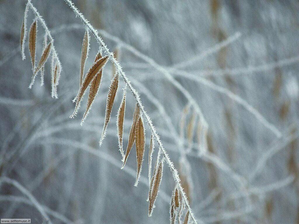 Foto desktop della stagione inverno 054