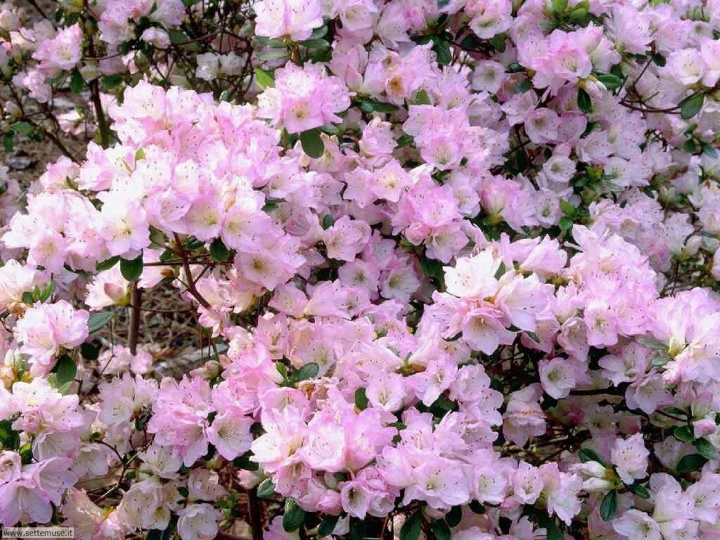 Foto primavera per sfondi desktop for Sfondi desktop fiori