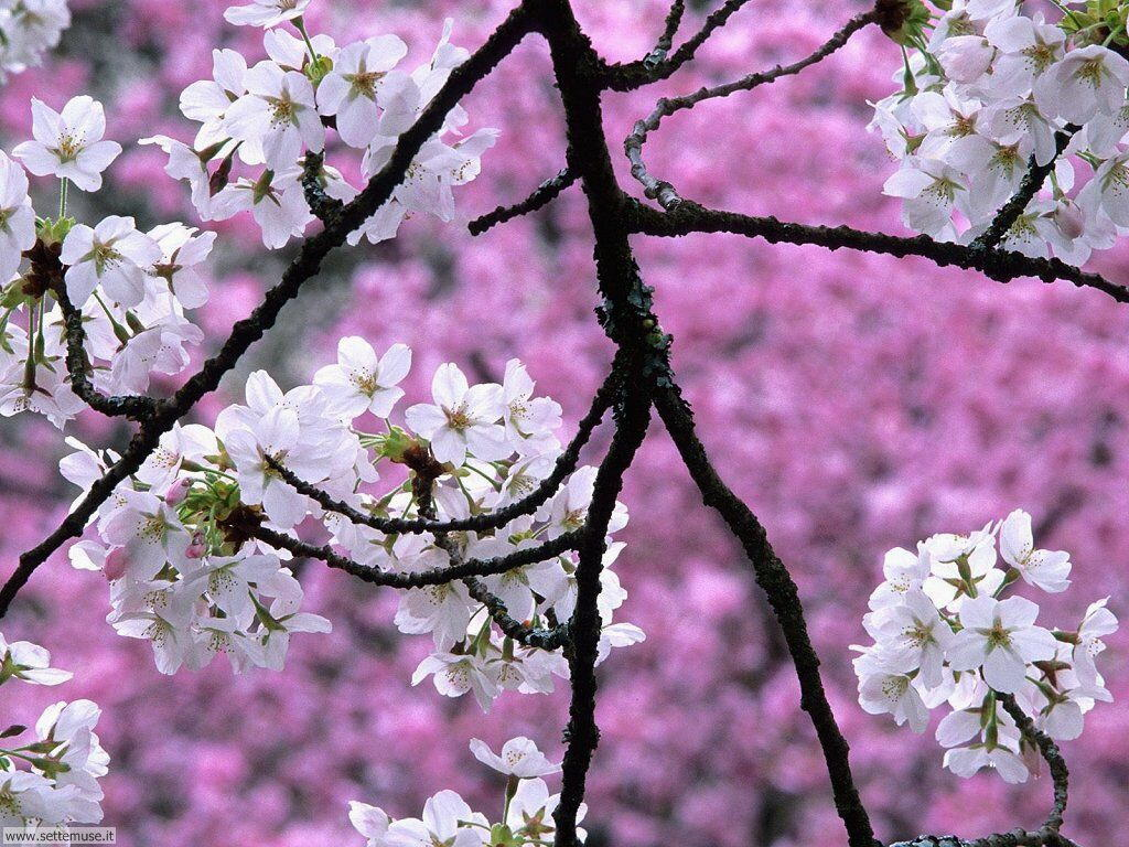 Foto Primavera Per Sfondi Desktop Settemuseit