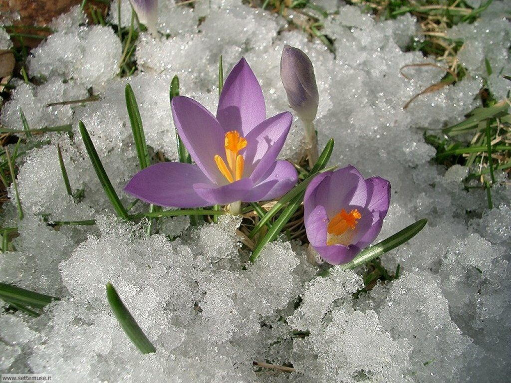 Foto primavera per sfondi desktop for Sfondi gratis desktop inverno