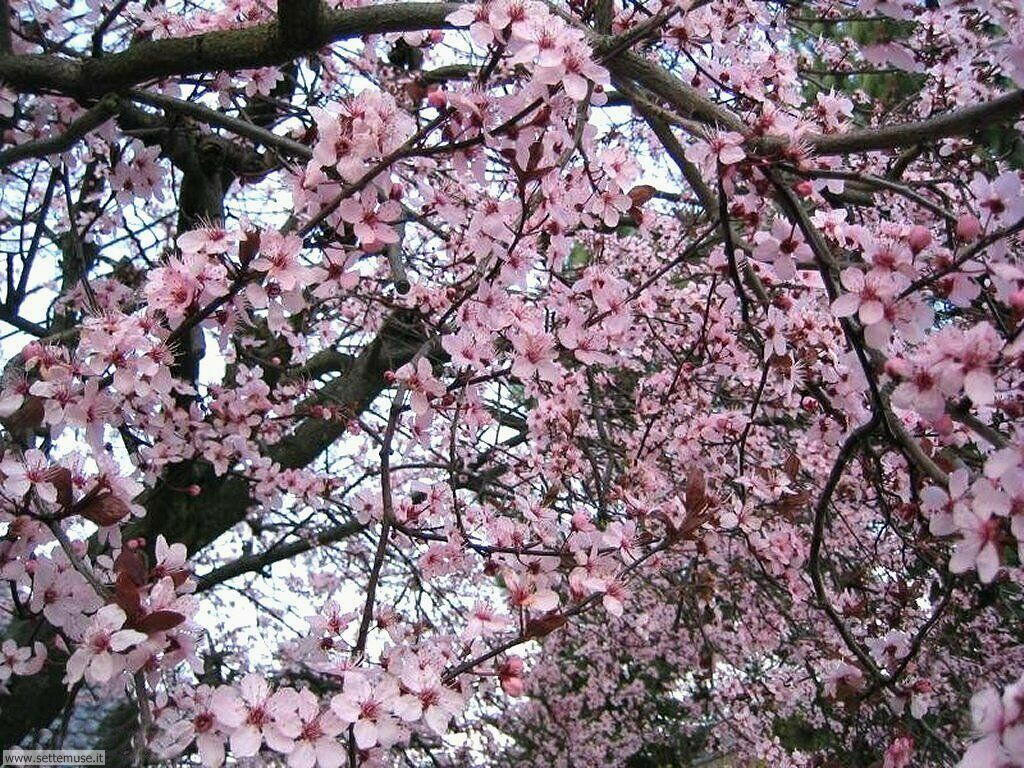 stagione_primavera 8
