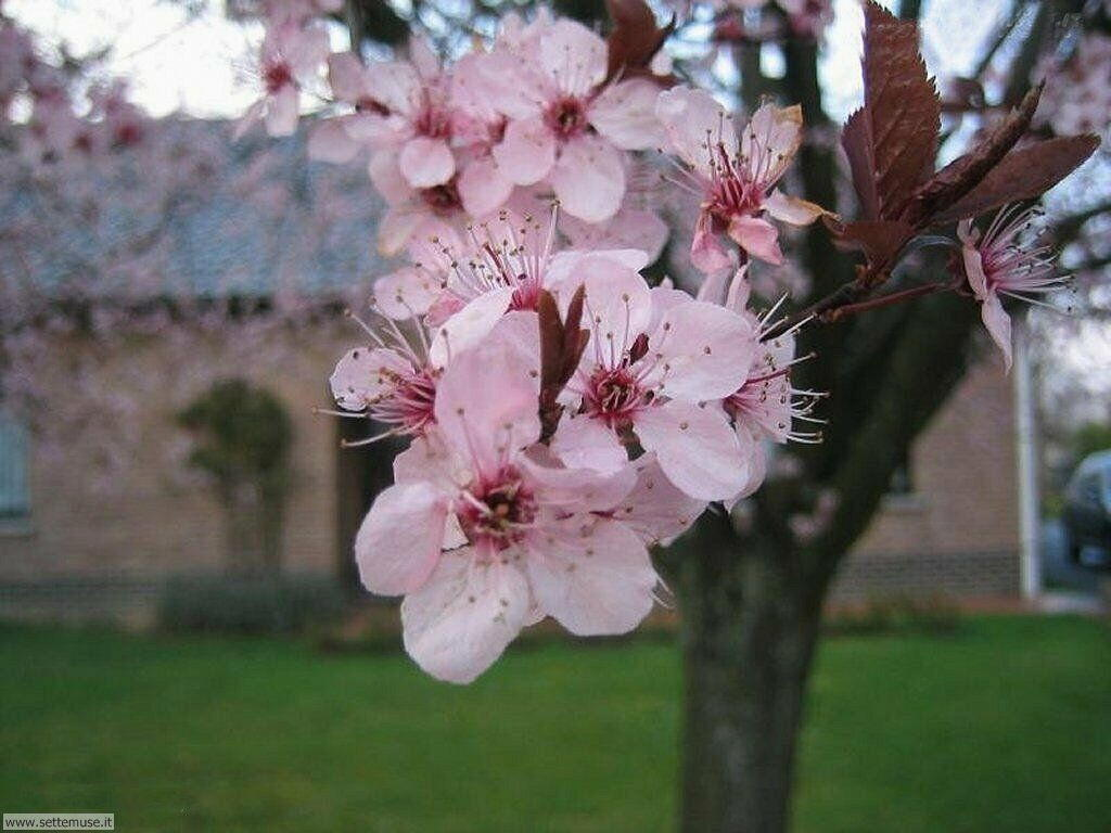 Foto primavera per sfondi desktop for Sfondi desktop primavera