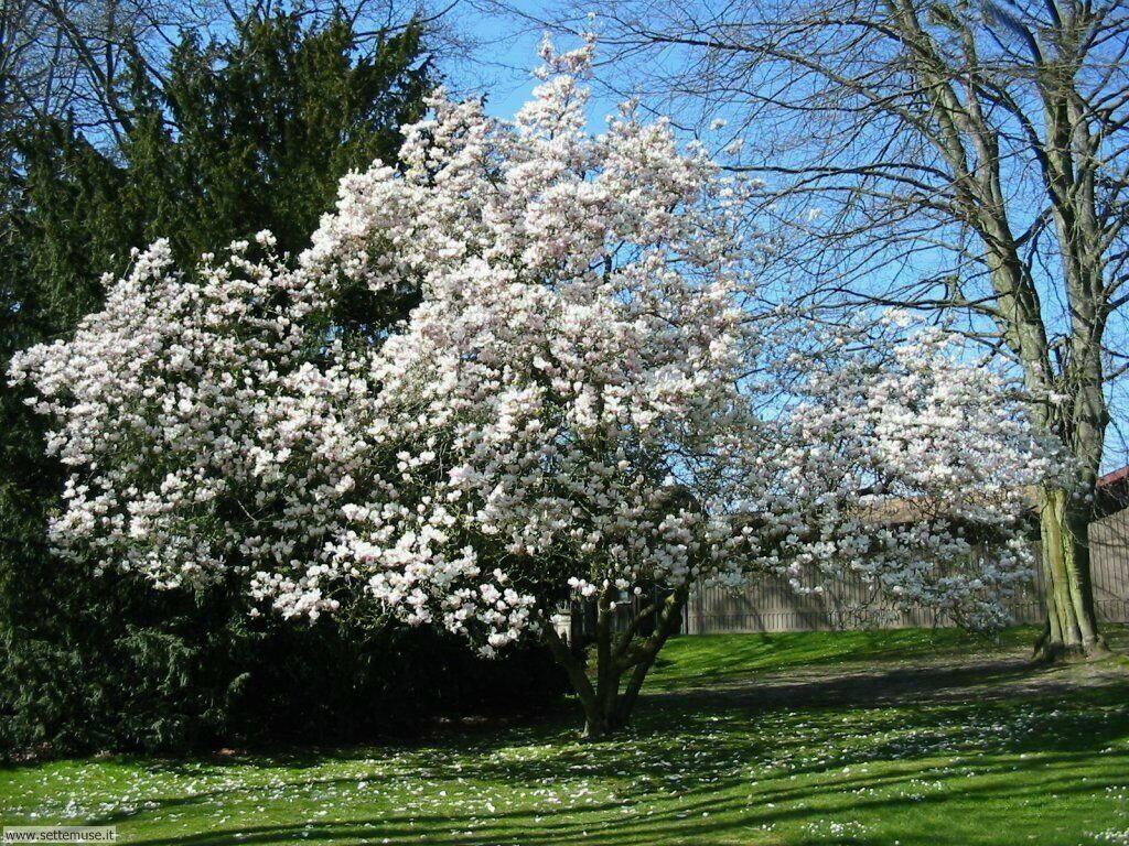 stagione_primavera 10