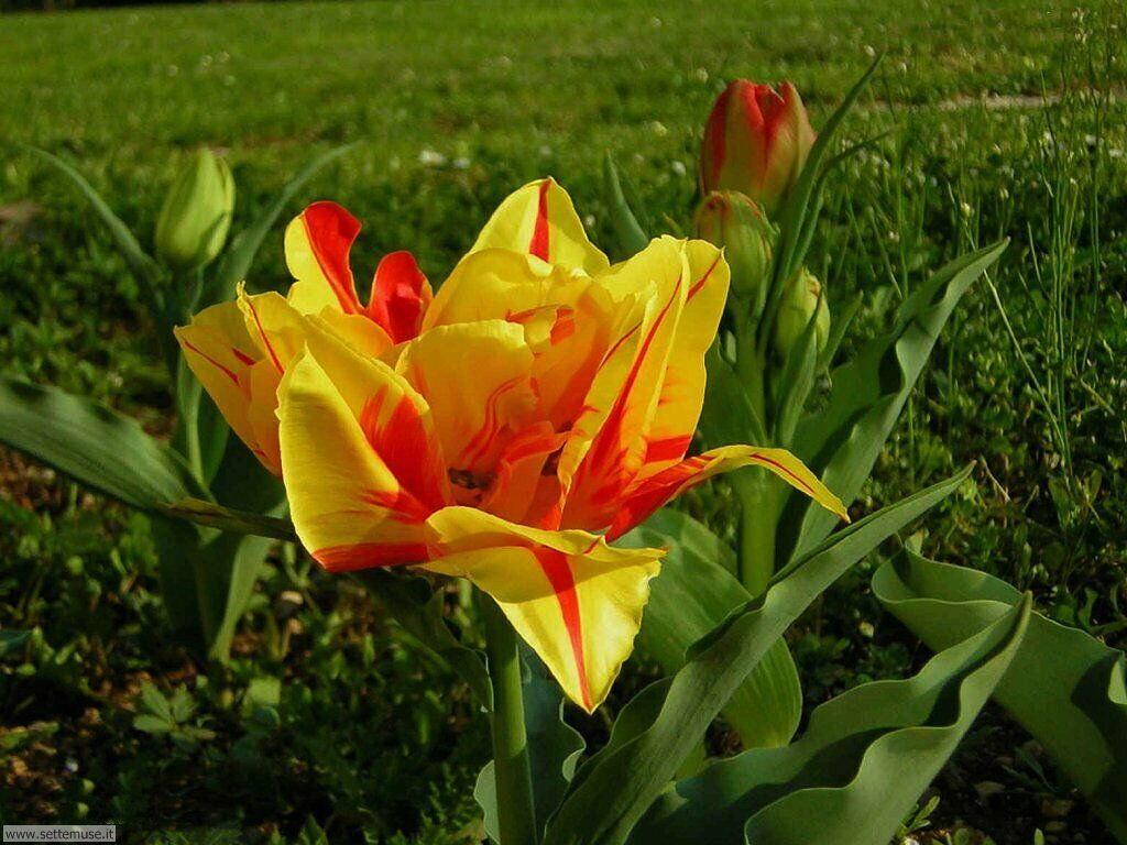 stagione_primavera 11